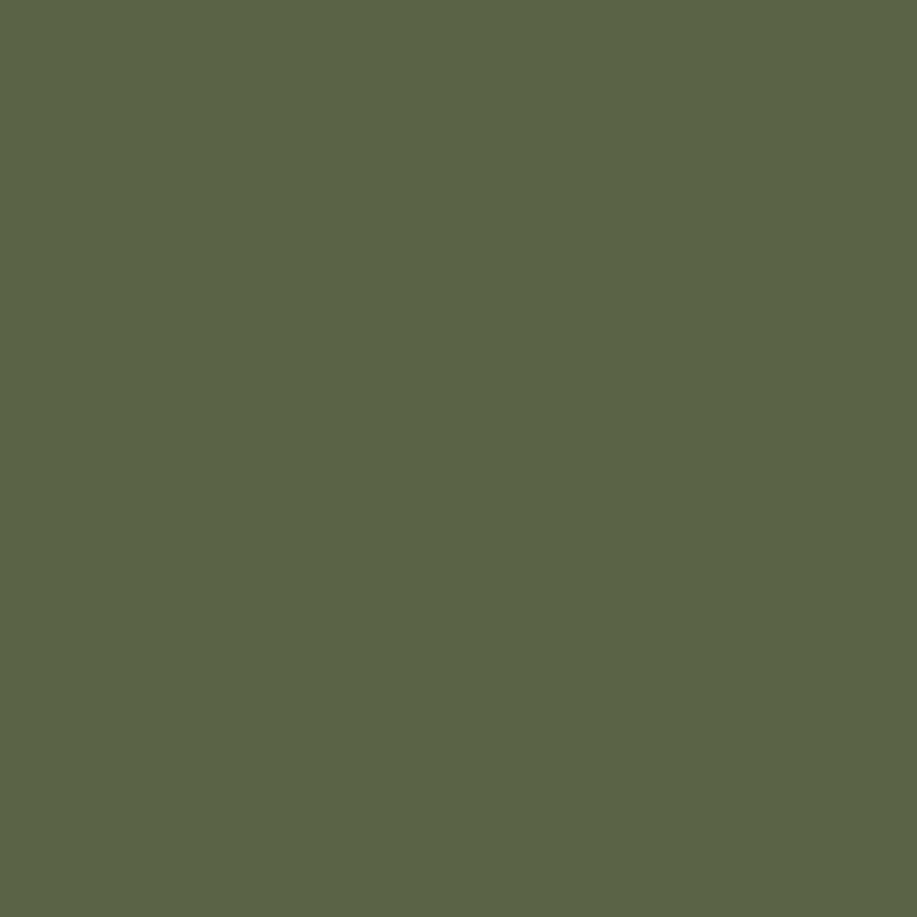 Kra Pao – Indisches Basilikum – Holy Basil