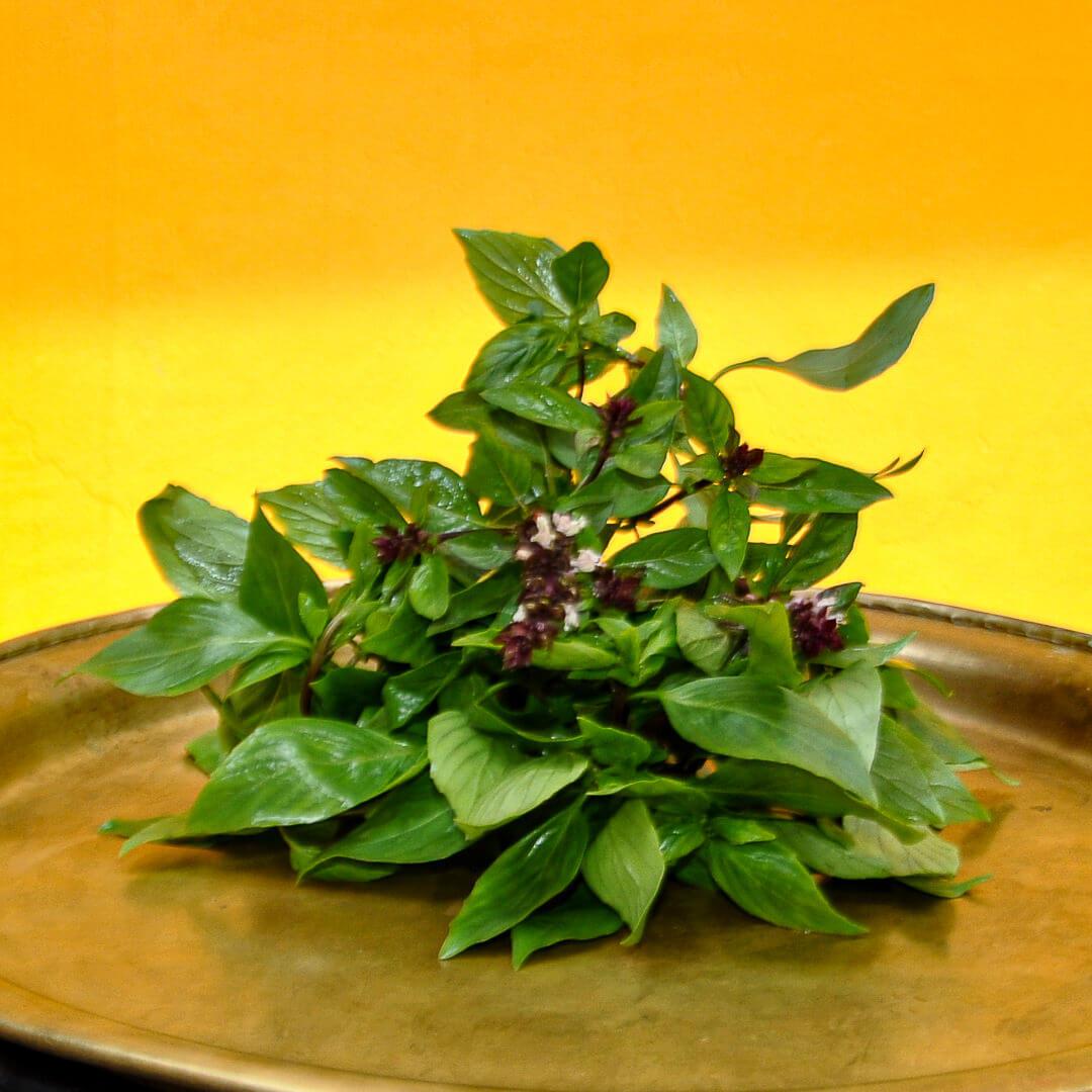 Thaibasilikum (Ocimum Basilicum)