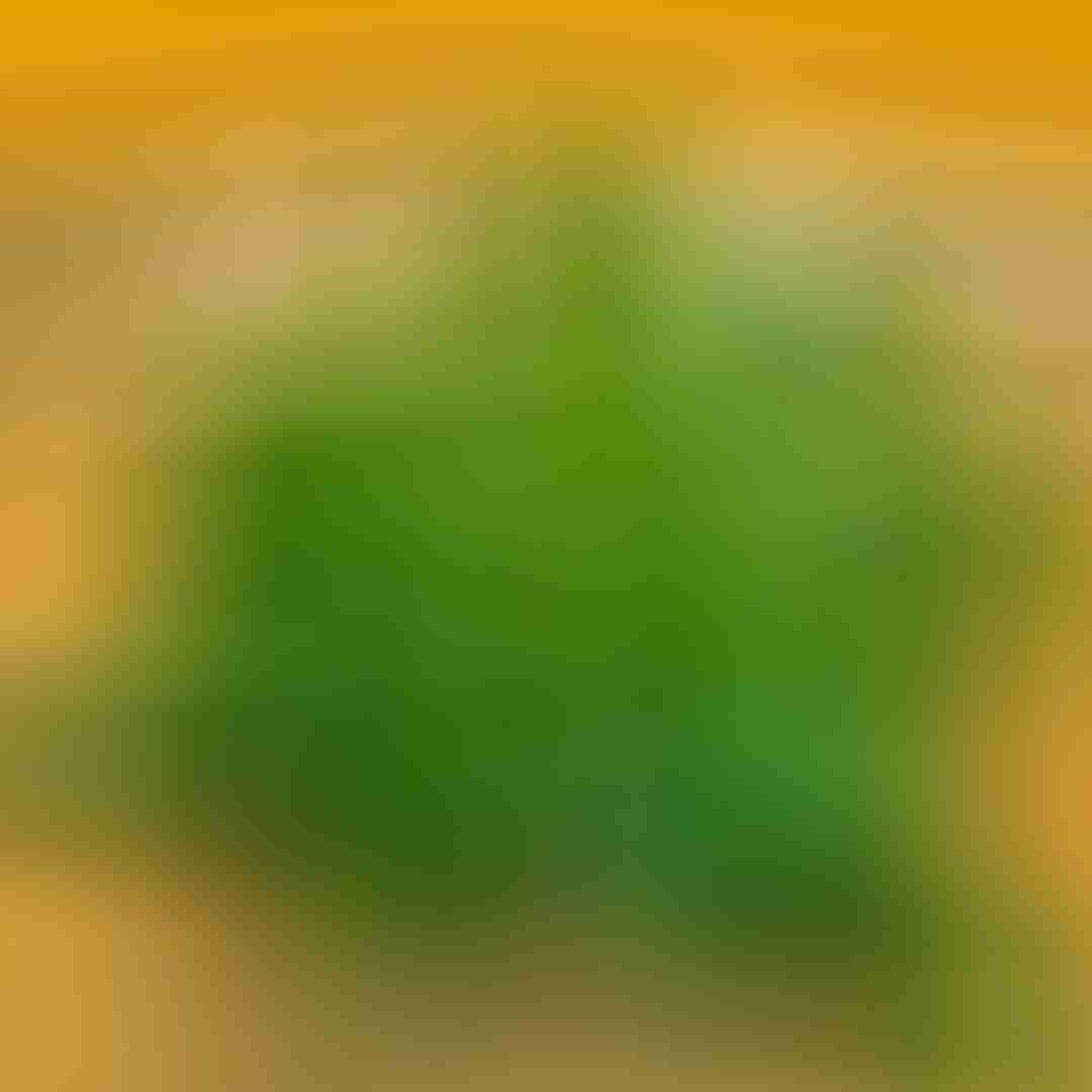 Vietnamesische Melisse (Elsholtzia ciliata) rau kinh gioi